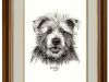 A Dapper Dog – The Cairn Terrier