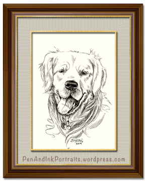 Portrait of Golden Retriever dog done in pen and ink by pet portrait artist Shafali - Cats, Dogs, Kittens, Pups and wildlife drawings, sketches, art.