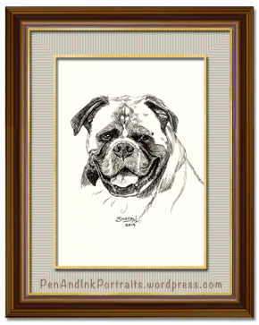 Portrait of Boxer done in pen and ink by pet portrait artist Shafali - Cats, Kittens, Dogs, Pups and Wildlife drawings, sketches, art.
