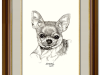 The Cute and Fun-loving Chihuahua