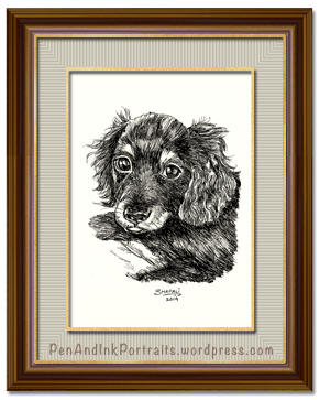 Portrait of Dachshund Wire-haired Pup done in pen and ink by pet portrait artist Shafali - Cats, Kittens, Dogs, Pups and Wildlife drawings, sketches, art.