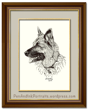 Portrait of German Shepherd a.k.a Alsatian dog done in pen and ink by pet portrait artist Shafali - Cats, Dogs, Kittens, Pups and wildlife drawings, sketches, art.