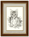 The Kooky Kitten – A Short-haired Tabby