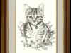 The Kooky Kitten – A Short-hairedTabby