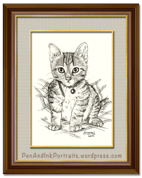 Portrait of Short-haired Tabby Kitten done in pen and ink by pet portrait artist Shafali - Cats, Kittens, Dogs, Pups and Wildlife drawings, sketches, art.