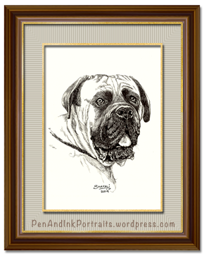Portrait of a mastiff done in pen and ink by pet portrait artist Shafali - Cats, Kittens, Dogs, Pups and Wildlife drawings, sketches, art.