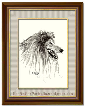 Portrait of Rough Collie dog done in pen and ink by pet portrait artist Shafali - Cats, Kittens, Dogs, Pups and Wildlife drawings, sketches, art.
