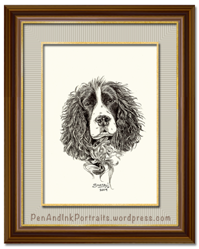 Portrait of Springer Spaniel done in pen and ink - Custom Portrait Commissions of Pets by Shafali - Animal drawings, Sketches, Wildlife art etc in back and white.