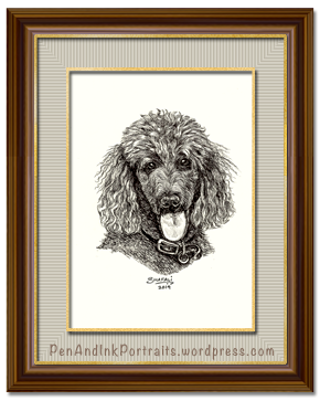 Portrait of Standard Poodle dog done in pen and ink by pet portrait artist Shafali - Cats, Kittens, Dogs, Pups and Wildlife drawings, sketches, art.
