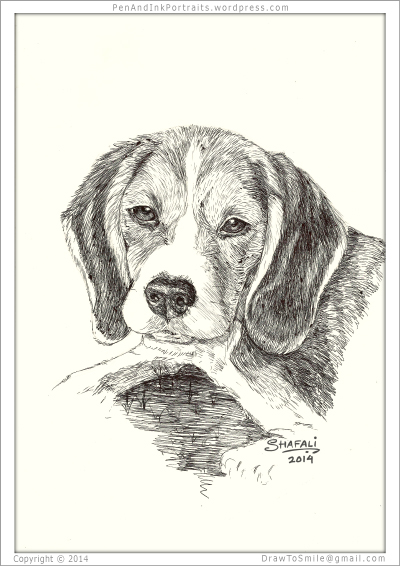Portrait of Beagle done in pen and ink - Custom Portrait Commissions of Pets by Shafali - Animal drawings, Sketches, Wildlife art, Artworks etc. in black and white.