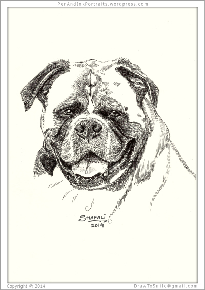 Portrait of Boxer done in pen and ink - Custom Portrait Commissions of Pets by Shafali - Animal drawings, Sketches, Wildlife art, Artworks etc. in black and white.