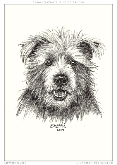 Portrait of Cairn Terrier done in pen and ink - Custom Portrait Commissions of Pets, Animal drawings, Sketches, Wildlife Art , Artworks etc. in black and white, by Shafali.