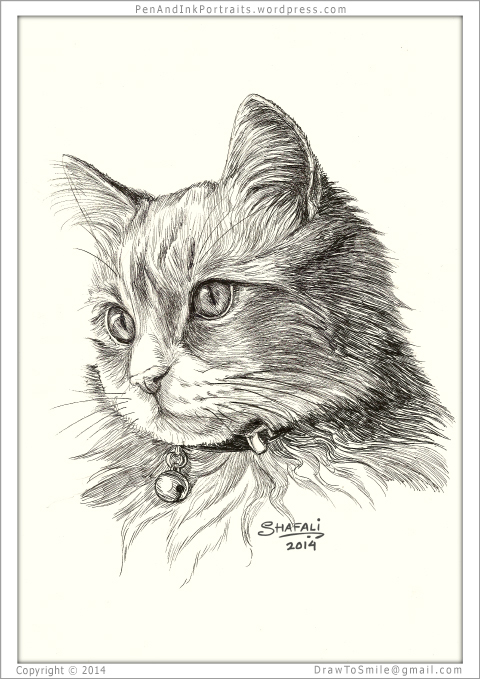 f24c9999a247 Portrait of a Adolescent Short-haired Tabby Cat done in pen and ink - Custom