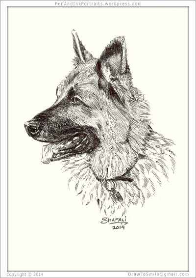 Portrait of German Shepherd a.k.a Alsatian / GSD done in pen and ink - Custom Pet Portraits by Shafali - Animal drawings, Sketches, Wildlife art, Artworks etc. in black and white.