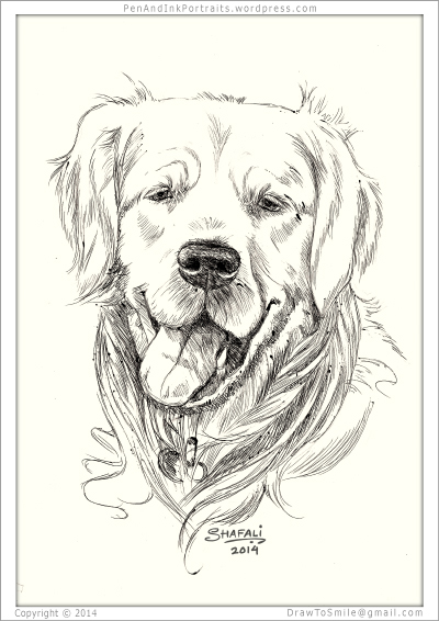 Portrait of Golden Retriever done in pen and ink - Pet Portraits by Shafali - Animal drawings, Sketches, Wildlife art, Artworks etc. in black and white.