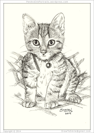 Portrait of Short-haired Tabby Kitten done in pen and ink - Custom Portrait Commissions of Pets by Shafali - Animal drawings, Sketches, Wildlife art, Artworks etc. in black and white.