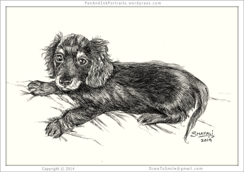 Portrait of Dachshund Wire-haired Pup (full-body)done in pen and ink - Custom Portrait Commissions of Pets by Shafali - Animal drawings, Sketches, Wildlife art, Artworks etc. in black and white.