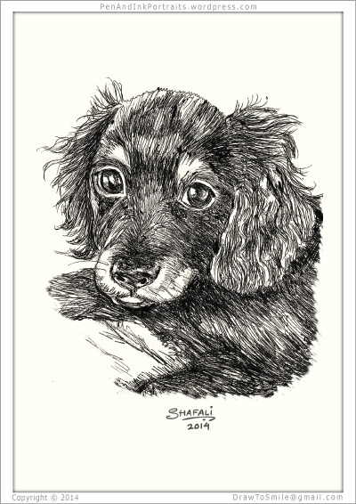 Portrait of Dachshund Wire-haired Pup done in pen and ink - Custom Portrait Commissions of Pets by Shafali - Animal drawings, Sketches, Wildlife art, Artworks etc. in black and white.
