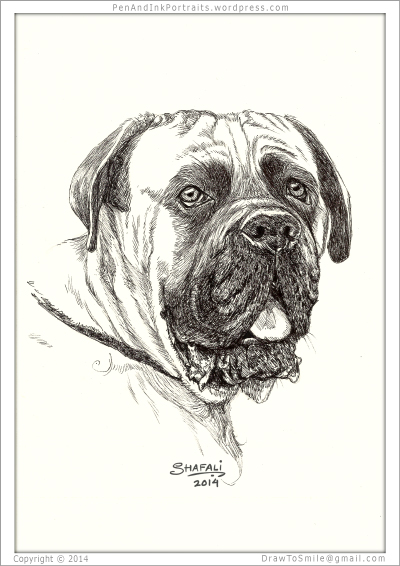 Portrait of the English Mastiff done in pen and ink - Custom Portrait Commissions of Pets by Shafali - Animal drawings, Illustrations, Sketches, Wildlife art, Artworks etc. in back and white.
