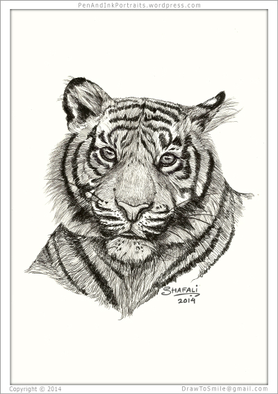 Portrait of Bengal Tiger done in pen and ink - Custom Portraits Commissions of Animals and wildlife by Shafali - Artists Drawings, Illustrations and Sketches of pets, dogs, cats, horses, people etc.