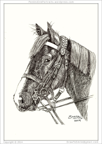 Portrait of horse done in pen and ink custom portraits commissions