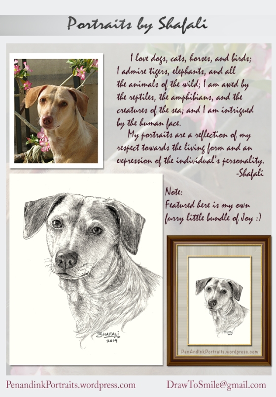 A Portrait From Photograph - A Private Commission by Shafali; the pet portrait artist's statement. Custom commissions of dogs, cats, horses and other animals and wildlife drawings in Pen and Ink.