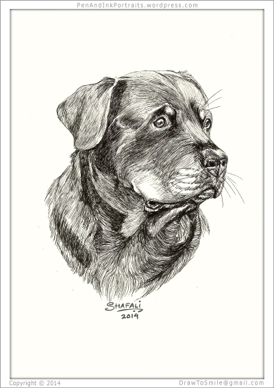 Portrait of Rottweiler done in pen and ink - Custom Portrait Commissions of Pets by Shafali - Animal drawings, Illustrations, Sketches, Wildlife art, Artworks etc. in black and white.