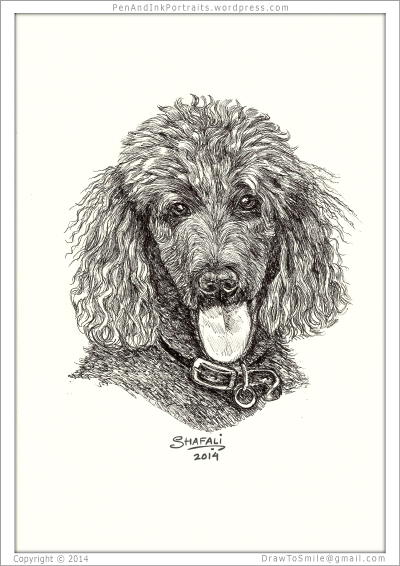 Portrait of Standard Poodle done in pen and ink - Custom Portrait Commissions of Pets by Shafali - Animal drawings, Sketches, Wildlife art, Artworks etc. in black and white.