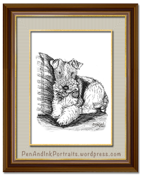 Pet Portraits - Wire Fox Terrier - Dewey Dewester in Pen and Ink - Commissions .