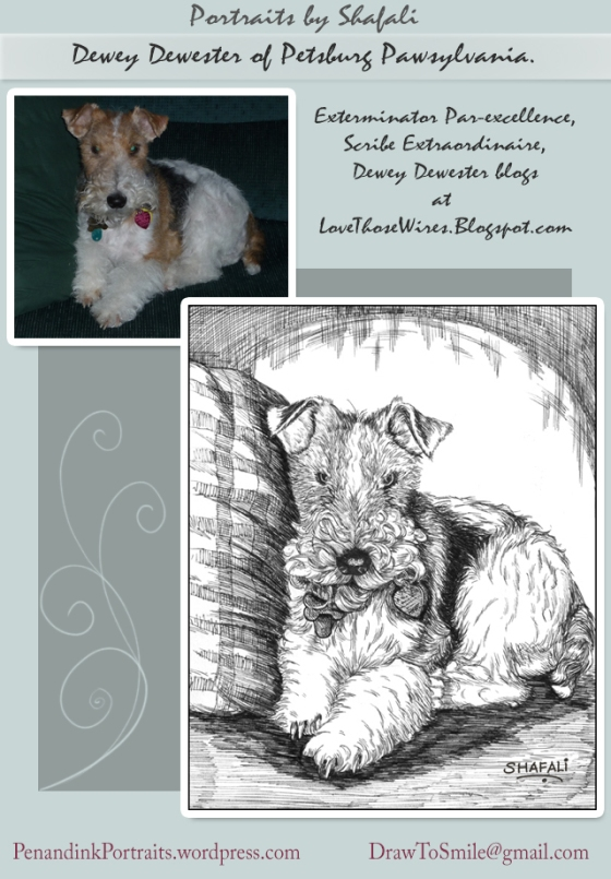 Pet Portraits in Pen and Ink using Photos as reference - Dewey Dewester Wire Fox Terrier.