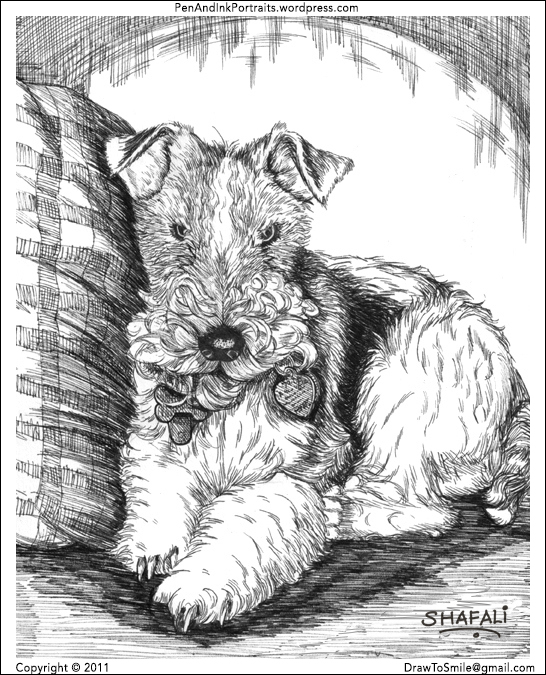 Wire Fox Terrier Dewey Dewester's portrait - medium pen and ink - pet portrait artist: shafali