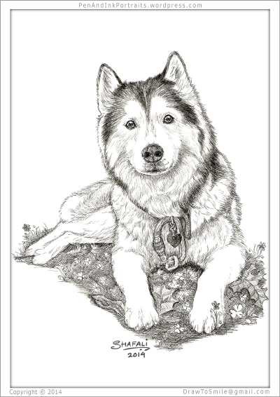 Siberian Husky Art - Featured: Miss Khyra, the Sweetest Sibe in the world!