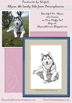 Pet Portraits from Photographs - A Pen and Ink portrait of Khyra - the Siberian Husky from Pennsylvania- by Shafali.